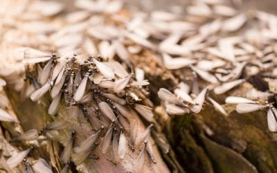 4 Signs of Termites in the Home